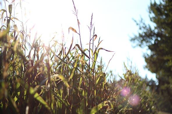 t-strobe-sunshine-web